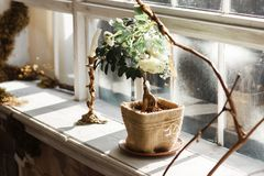 Bonsai tree in handmade sackcloth pot and candlestick on the window sill. Rustic diy decor.  Stock Image