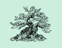 Bonsai tree on a hillock. Drawing pen, black and white Royalty Free Stock Photography