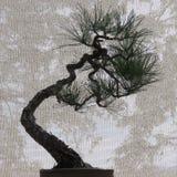 Bonsai Tree with Interesting Background stock photos