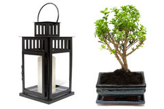 Bonsai tree and japanese candle lamp Stock Photos