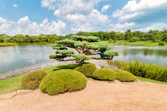 Bonsai tree in the Japanese Garden at Chicago Botanic Garden royalty free stock images