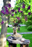 Bonsai tree - lilac stock images
