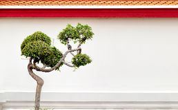 Bonsai tree and little bird on a background of the wall of a Buddhist temple,Bangkok, Thailand. Bonsai tree and little bird on a background of the white wall Royalty Free Stock Image