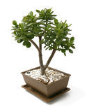 Bonsai tree - little bush Stock Photos