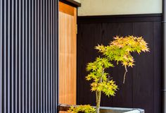 Bonsai tree maple tree, Kyoto, Japan. Copy space for text. royalty free stock images
