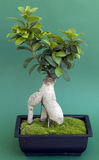 Bonsai tree with moss Stock Image