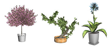 Bonsai tree and plants  Royalty Free Stock Photos