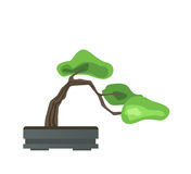 Bonsai tree in a pot. Japanese art of growing miniature trees. Vector illustration, isolated on white. Royalty Free Stock Photos