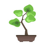 Bonsai tree in a pot. Japanese art of growing miniature trees. Vector illustration, isolated on white. Royalty Free Stock Images