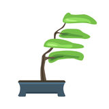 Bonsai tree in a pot. Japanese art of growing miniature trees. Vector illustration, isolated on white. Royalty Free Stock Photography