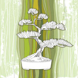 Bonsai tree in round pot on the striped background. Traditional Japanese symbol Stock Illustration