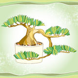 Bonsai tree in the round pot on the textured background. Traditional Japanese symbol Vector Illustration