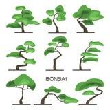 Bonsai tree set. Japanese art of growing miniature trees. Vector illustration, isolated on white. Royalty Free Stock Photos