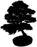 Bonsai Tree Silhouette Stock Photography