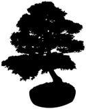 Bonsai Tree Silhouette. Black Miniature Bonsai Tree Silhouette Stock Photography