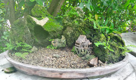 Bonsai Tree and small doll house in tray Stock Photo