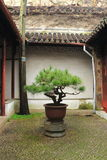 Bonsai Tree in a stone stand at liuyuan garden at autumn Royalty Free Stock Images