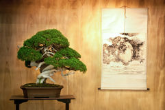 Bonsai tree in the Tokonoma. With a painting on paper scroll stock photos
