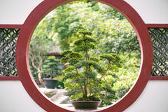 Bonsai tree on a traditional chinese red circular window in a pa Stock Photography