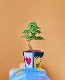 Bonsai Stock Photos
