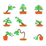 Bonsai Tree on white background ,Vector Royalty Free Stock Photography