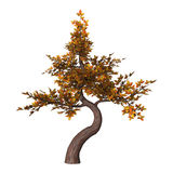 Bonsai Tree on White Royalty Free Stock Images