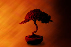 Bonsai Tree Wisdom Background. A bonsai tree on an abstract warm background Stock Photography