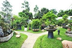 Bonsai trees Stock Photo