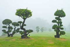 Bonsai trees Royalty Free Stock Images