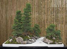Bonsai trees Stock Image