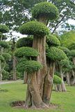 Bonsai trees in botanical garden Royalty Free Stock Image