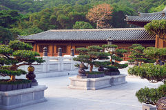 Bonsai trees in the Chi Lin Nunnery garden Royalty Free Stock Photos