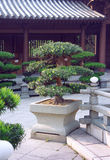 Bonsai trees in the Chi Lin Nunnery garden Stock Photo