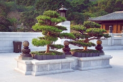 Bonsai trees in the Chi Lin Nunnery garden Stock Image