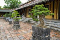 Bonsai trees on chinese temple courtyard Stock Photos