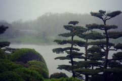 Bonsai Trees Foggy Landscape Stock Image