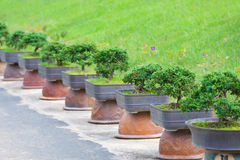 Bonsai trees garden Royalty Free Stock Image