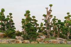 The bonsai trees Royalty Free Stock Photos