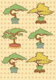 Bonsai trees Royalty Free Stock Photography