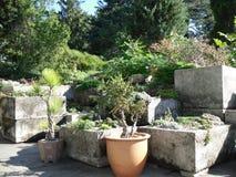 Bonsai Trees in New York Botanical Garden. Royalty Free Stock Photography