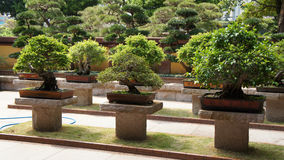 Bonsai trees Stock Images