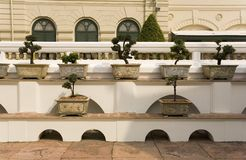 Bonsai trees in planters Royalty Free Stock Photo