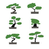 Bonsai trees set japanese style isolated Stock Image