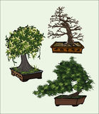 Bonsai trees vector set Royalty Free Stock Image