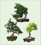Bonsai trees vector set Royalty Free Stock Photo