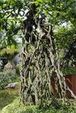 Bonsai - trunk Royalty Free Stock Photos