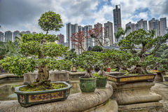 Bonsai in un giardino immagine stock