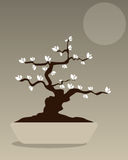 Bonsai - vector design. Illustration of a background with a  bonsai.EPS file available Royalty Free Stock Photo