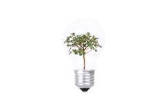 Bonsai wśrodku Lightbulb Fotografia Royalty Free