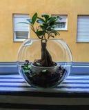 Bonsai weinig tuin Stock Afbeeldingen